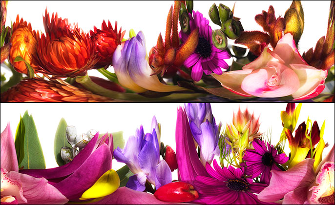 BLOOMING BANQUET - Limited Edition Photo Art by Michael Collins Images 03 and 09