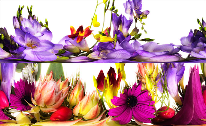 Blooming Banquet - Limited Edition Photo Art by Michael Collins Images 18 and 11