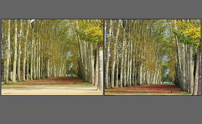 VR Art Glass Trees in the garden of Versailles before and after enhancements