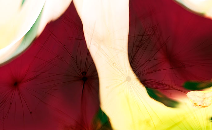 Original Photographic Art by Michael Collins for Visual Resource 06 NATURES SHAPE Collection 2